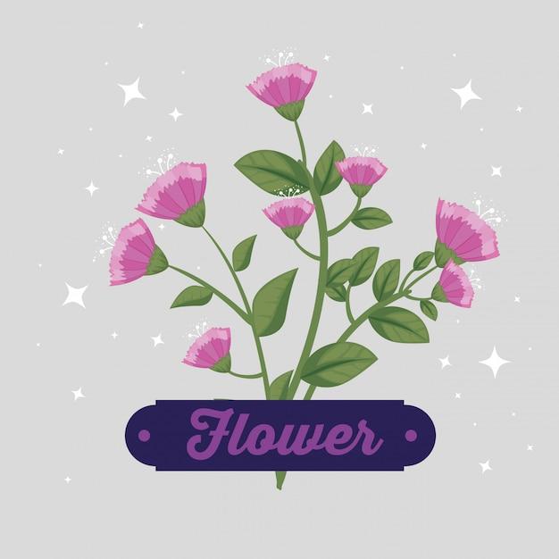 Bloemen met bloemblaadjes en bladeren Gratis Vector