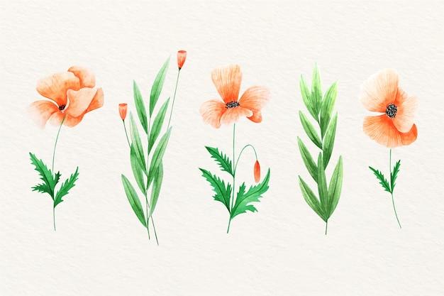Bloemen van de waterverf de wilde open tulp Gratis Vector