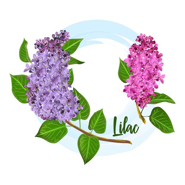 Bloemen van decoratieve lila bush Premium Vector