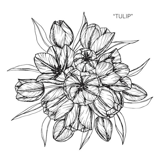 Boeket Van Tulip Tekening Illustratie Vector Premium Download