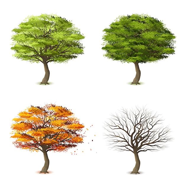 Bomen in vier seizoenen Gratis Vector