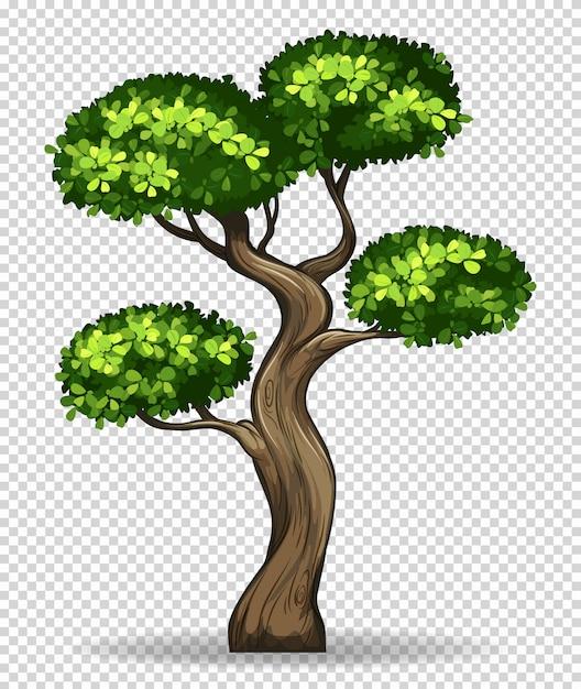 Bonsaiboom op transparant Gratis Vector