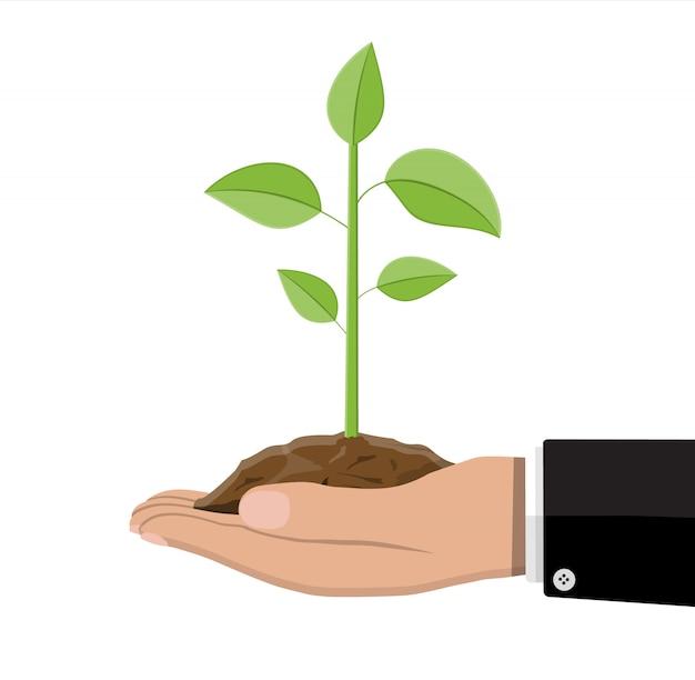 Boom met bladeren en grond in de hand. Premium Vector