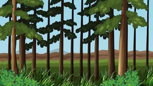 Bosscène met bomen en gebied Gratis Vector