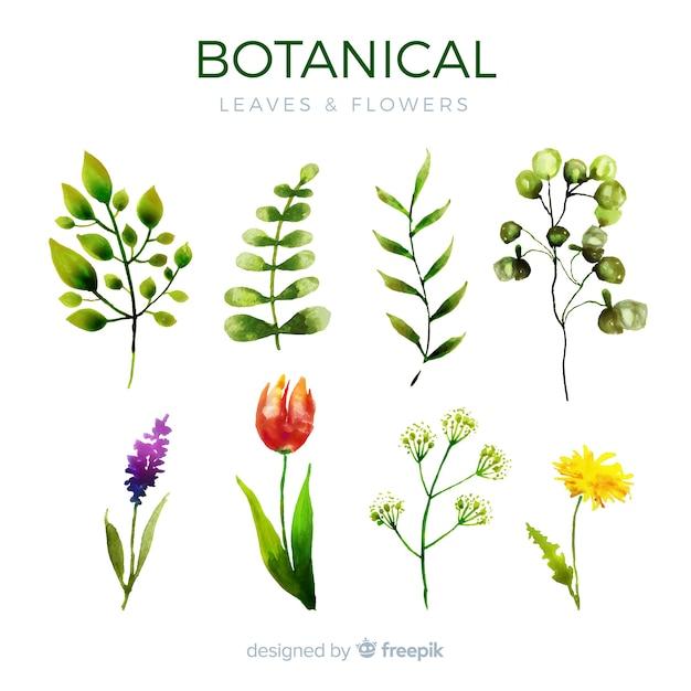 Botanische bloemen- en bladerencollectie Gratis Vector