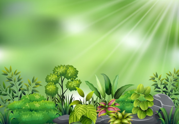 Botanische fabrieksmening op zonlicht Premium Vector