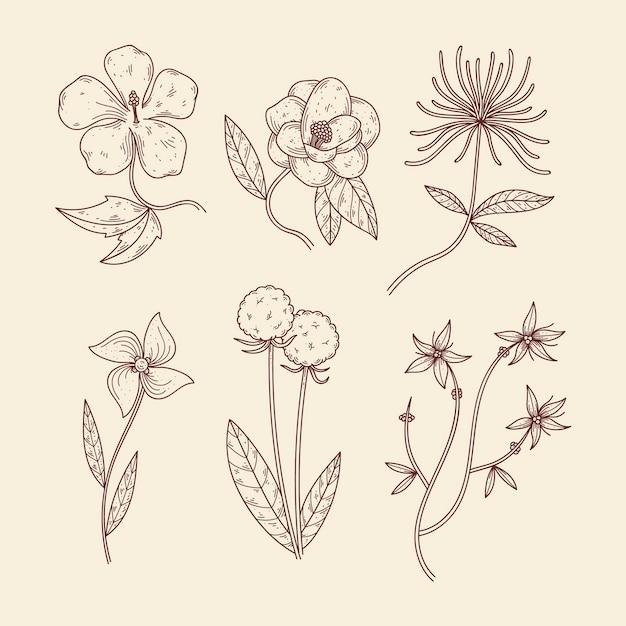Botanische kruiden & wilde bloemen in vintage stijl Gratis Vector