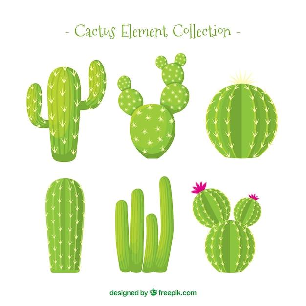 Cactus collectie met natuurlijke stijl Gratis Vector