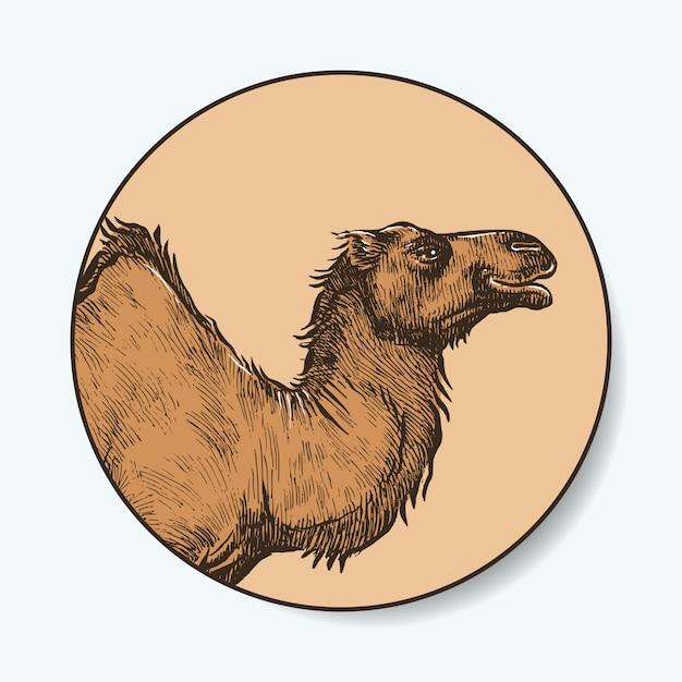 Camel hand getrokken Premium Vector