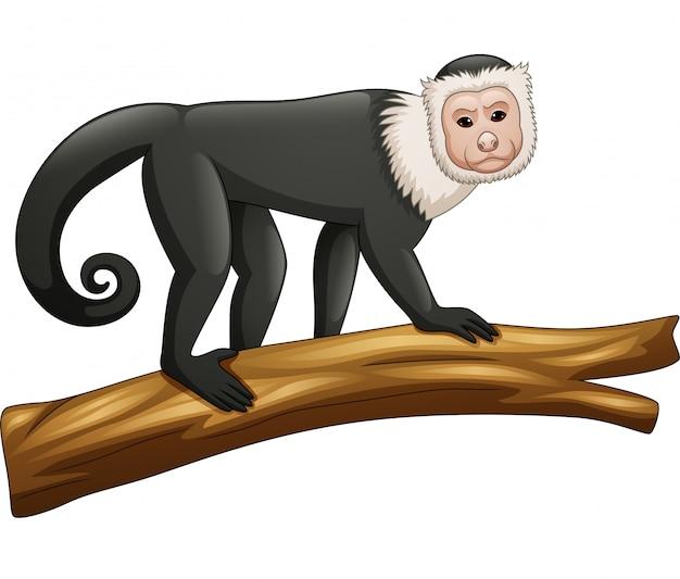 Capuchin aap op witte achtergrond wordt geïsoleerd die Premium Vector