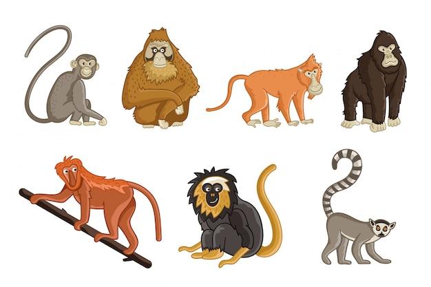 Cartoon apen. dieren in het wild en dierentuindieren Premium Vector