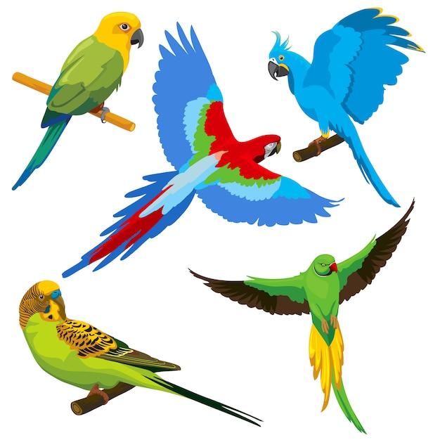 Cartoon papegaaien Premium Vector