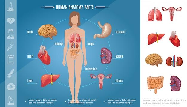 Cartoon vrouw lichaamsorganen samenstelling met hersenen maag longen nieren hart lever milt darm vrouwelijk voortplantingssysteem Gratis Vector