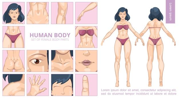 Cartoon vrouwelijke lichaamsdelen samenstelling Gratis Vector