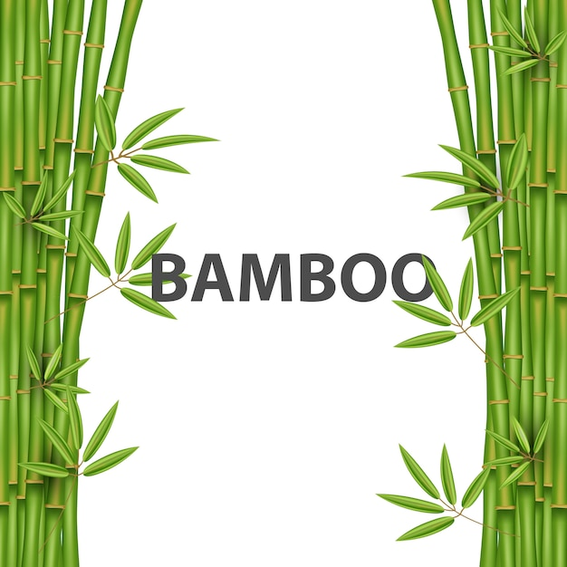 Chinese bamboegrasboom Premium Vector
