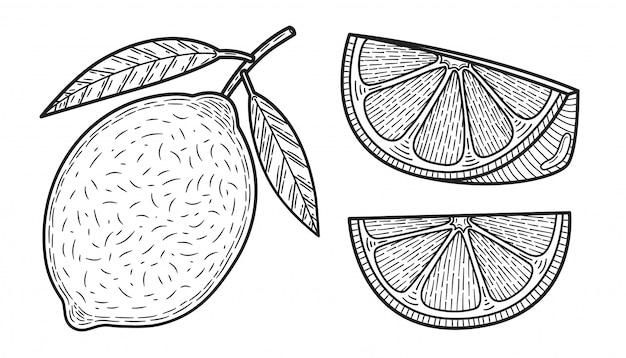 Citroenen. set van zwart-wit citrusvruchten. hele citroen, plak, gesneden stukjes, plant bladeren. Premium Vector