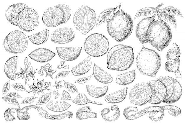 Citrusvruchten citroen hand getrokken voedsel. Premium Vector