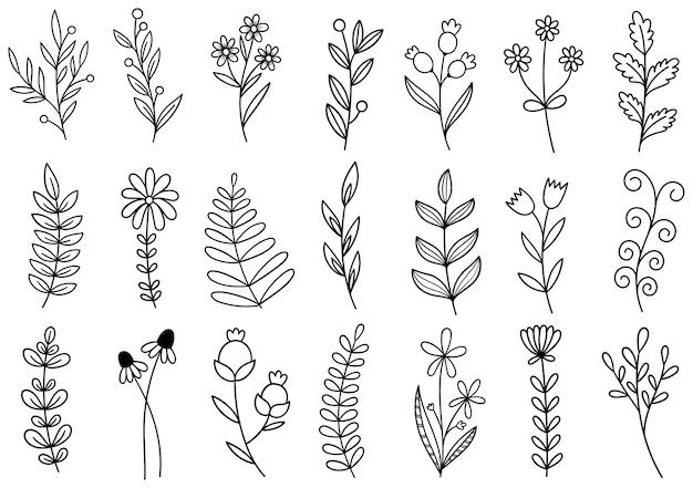 Collectie bosvaren eucalyptus kunst gebladerte natuurlijke bladeren kruiden in lijnstijl. decoratieve schoonheid elegante illustratie voor ontwerp hand getrokken bloem Premium Vector