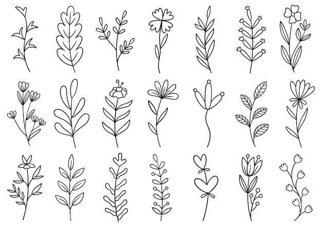 Collectie bosvaren eucalyptus kunst gebladerte natuurlijke bladeren kruiden in lijnstijl. hand getekende bloem Premium Vector