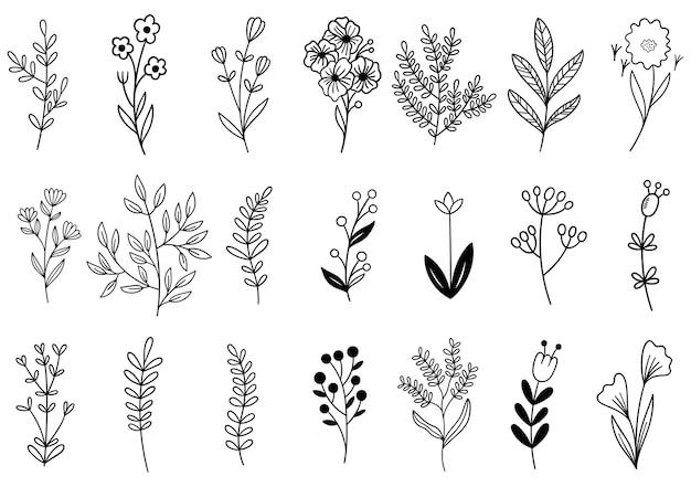 Collectie bosvaren eucalyptus kunst gebladerte natuurlijke bladeren kruiden in lijnstijl. Premium Vector