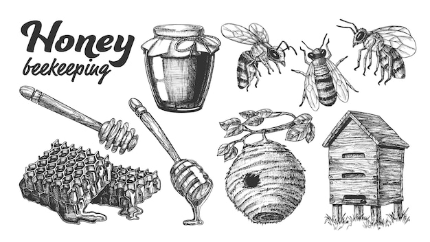 Collectie honey imkerij bijenteelt set. Premium Vector