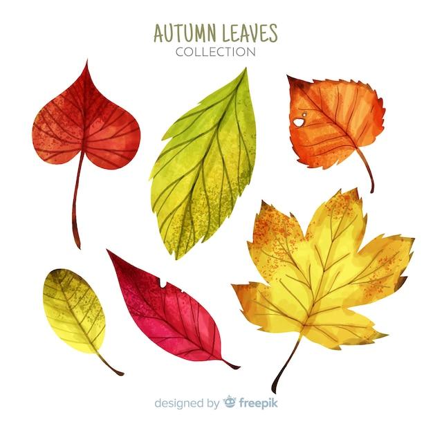 Collectie van aquarel herfstbladeren Gratis Vector