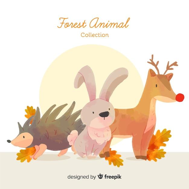 Collectie van hand getrokken bos dieren Gratis Vector