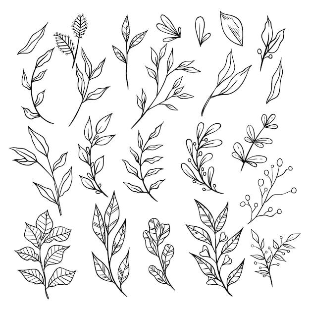 Collectie van schetsmatig vintage takken met bladeren. decoratieve elementen voor decoratie Premium Vector