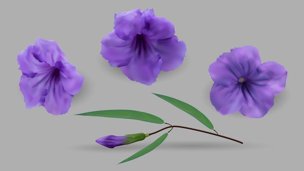 Cracker plant paarse bloemen en groene bladeren Premium Vector