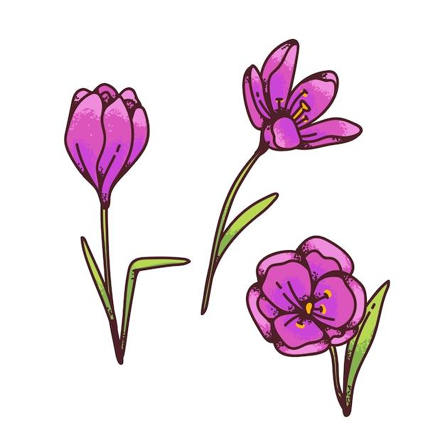Crocus roze saffraan bloemen lente primula's instellen voor ontwerp wenskaart. overzicht schets illustratie Premium Vector
