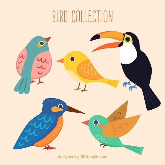 Cute vogels collectie Gratis Vector