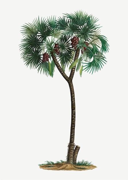 Dadelpalmboom Gratis Vector