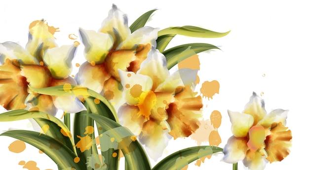 Daffodil bloemen aquarel Premium Vector