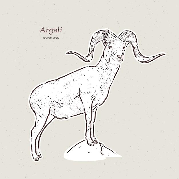 De argali, of de bergschapen, tekenen met de hand schets Premium Vector