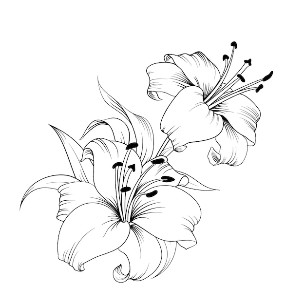 De bloeiende lelie. Premium Vector