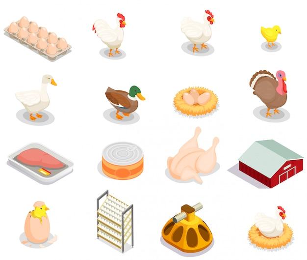 De isometrische reeks van de gevogelteproductie van broedkip vogelvoeder ingeblikte goederen eieren gastronomische geïsoleerde producten Gratis Vector
