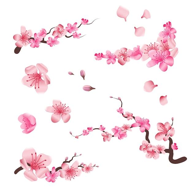 De kers bloeiende bloemen van de lentesakura Premium Vector
