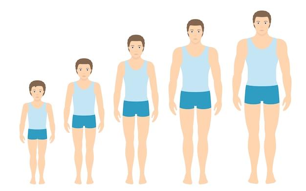 De lichaamsverhoudingen van de mens veranderen met de leeftijd. Premium Vector