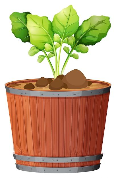 De potteninstallatie met groen verlaat geïsoleerd Gratis Vector