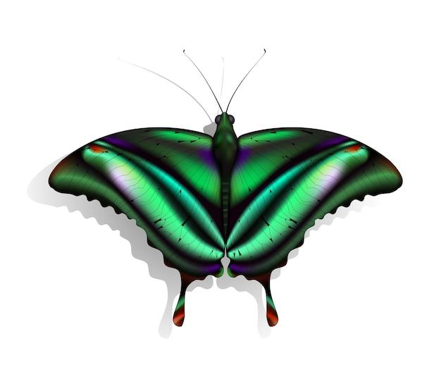 De prachtige groene vlinder met rode en paarse vlekken Premium Vector