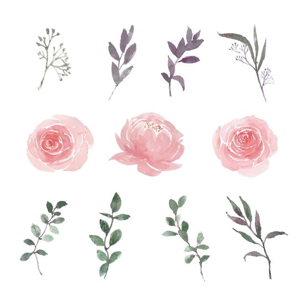 De reeks van waterverf kleurrijke bloem en gebladerteillustratie van elementen isoleerde wit. Gratis Vector
