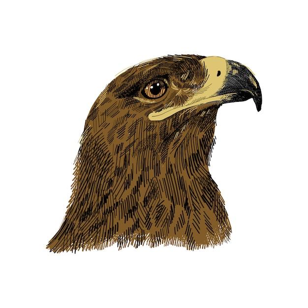 De saker-valk falco cherrug kleurrijke illustratie. eagle hand getrokken schets tekening. vogel voor valkerij, dieren in het wild, valk hoofdportret. Premium Vector