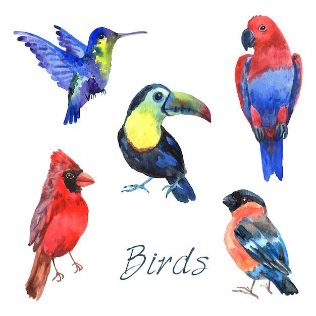 De tropische vogels van de regenwoudpapegaai met mooi gevederte en gebogen de inzamelingssamenvatting geïsoleerde vectorillustratie van de bekkenwaterverfpictogrammen Gratis Vector