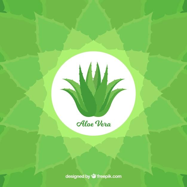 Decoratieve achtergrond met aloë vera plant Gratis Vector