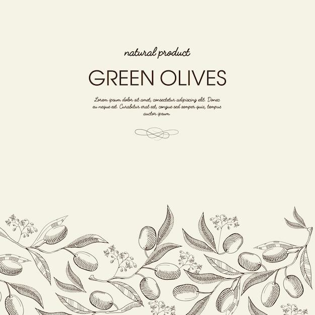 Decoratieve natuurlijke botanische schets sjabloon met tekst en biologische groene olijftakken op licht Premium Vector