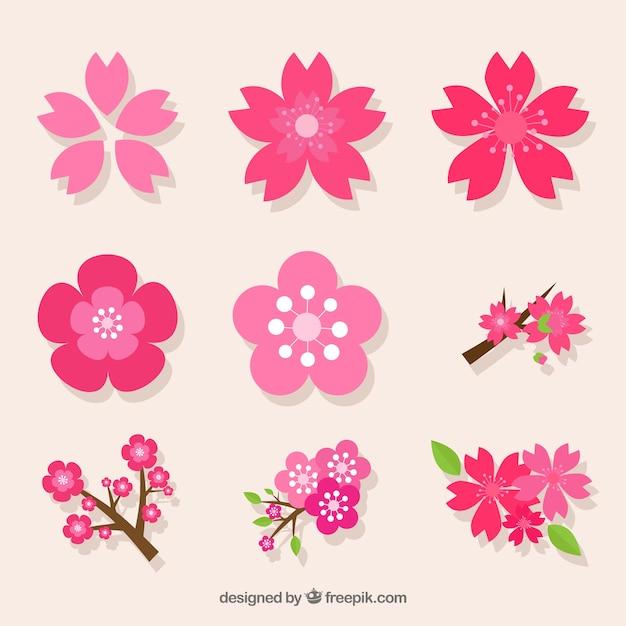Decoratieve pak verscheidenheid van kersenbloesems Gratis Vector