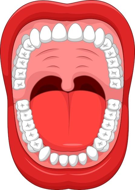 Delen van menselijke mond Premium Vector