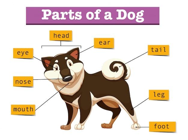 Diagram dat verschillend deel van hond toont Gratis Vector