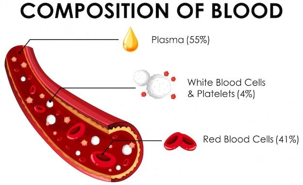 Diagram met samenstelling van bloed Gratis Vector