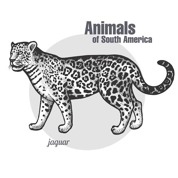 Dieren van zuid-amerika jaguar. Premium Vector